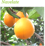 navelate