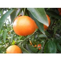 Mandarinas Mioro 5kg