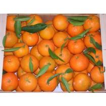 Mandarinas Mioro 10kg