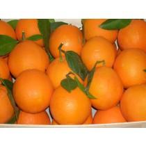 Taronja suc