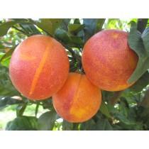 Taronja Sanguina 5kg