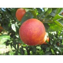 Naranja Sanguina 5kg