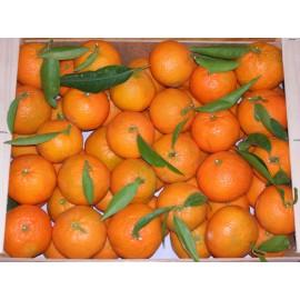 Mandarina Mioro 5kg
