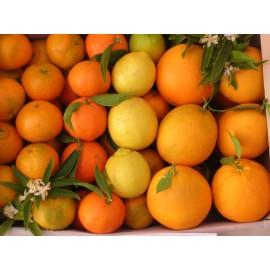 Combinats  Mandarines - Taronges Taula 15 kg