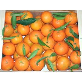 Mandarina Clemenules 5kg