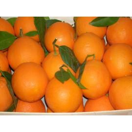 Taronja  Suc 15kg