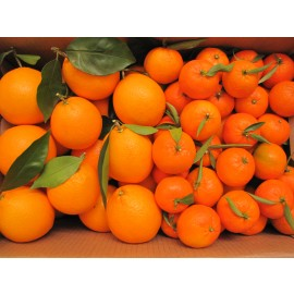 Combinats  Mandarines - Taronges Taula 15 kg