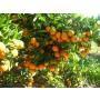 Mandarina Mioro 10kg