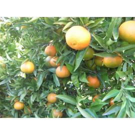 Mandarinas Hernandina 5kg