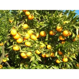 Mandarinas Clemenules 5kg