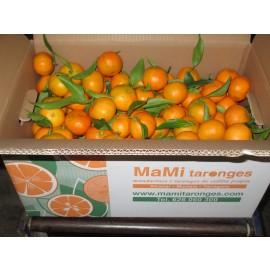 Mandarinas Formato familiar 15kg