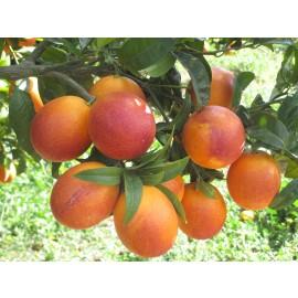 Naranja Sanguina 10kg
