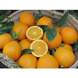 Naranja Navelate Mesa 10kg